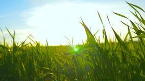 Hierba verde y cielo azul contra la perspectiva de una puesta del sol anaranjada