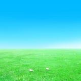 Hierba verde y cielo azul y caída Fotos de archivo