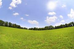 Hierba verde y cielos azules en el verano Fotografía de archivo
