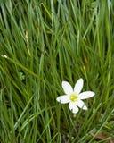 Hierba verde y flor Imagen de archivo libre de regalías