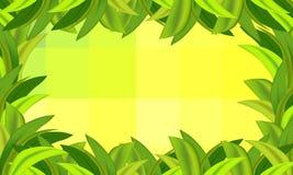 Hierba verde y fondo con los cuadrados Imagen de archivo libre de regalías