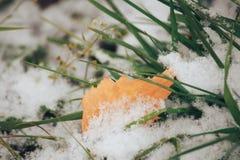 Hierba verde y hoja amarilla del otoño cubiertas en la primera helada y sn Fotos de archivo libres de regalías