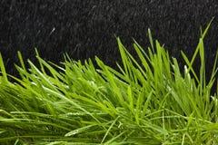 Hierba verde y lluvia Fotografía de archivo