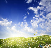 Hierba verde y manzanillas en la naturaleza Foto de archivo libre de regalías