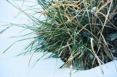 Hierba verde y nieve Fotos de archivo libres de regalías