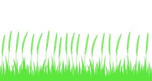 Hierba verde y oídos inconsútiles Imagenes de archivo