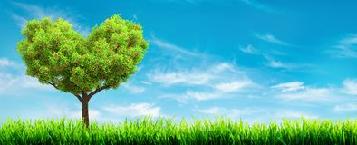 Hierba verde y paisaje del árbol fotografía de archivo libre de regalías