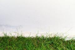 Hierba verde y pared blanca Imagen de archivo libre de regalías