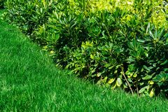 Hierba verde y plantas Foto de archivo libre de regalías