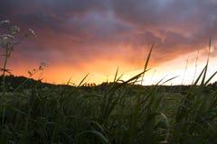 Hierba verde y puesta del sol viva Fotografía de archivo libre de regalías