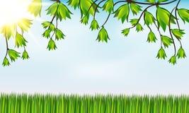 Hierba verde y ramas de árbol Imagen de archivo libre de regalías
