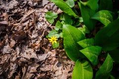 Hierba verde y seca foto de archivo libre de regalías
