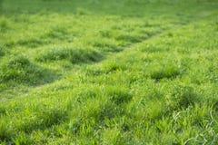 Hierba verde y una trayectoria Imágenes de archivo libres de regalías