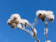 Hierba vestida en el sobretodo de la nieve imagenes de archivo