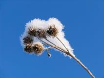 Hierba vestida en el sobretodo de la nieve Fotografía de archivo