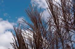 Hierba virginal y cielos bonitos Fotos de archivo libres de regalías