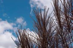 Hierba virginal y cielos bonitos Fotografía de archivo