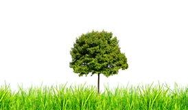 Hierba y árbol aislados Foto de archivo libre de regalías