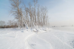 Hierba y árboles Foto de archivo libre de regalías