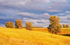 Hierba y árboles amarillos contra el sol poniente fotografía de archivo