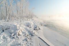 Hierba y árboles cubiertos con helada Imagenes de archivo