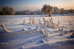 Hierba y árboles cubiertos con helada y nieve Fotografía de archivo libre de regalías