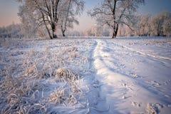 Hierba y árboles cubiertos con helada y nieve Foto de archivo