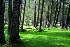 Hierba y árboles en el bosque Fotos de archivo