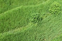 Hierba y arbustos ondulados verdes claros Foto de archivo