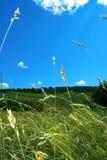 Hierba y cielo Fotos de archivo