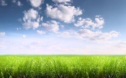 Hierba y cielo Imagen de archivo libre de regalías