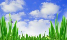 Hierba y cielo Fotos de archivo libres de regalías