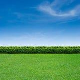 Hierba y cielo azul Foto de archivo libre de regalías