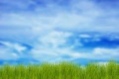 hierba y cielo azul Fotografía de archivo libre de regalías