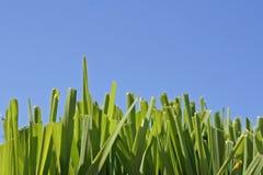 Hierba y cielo azul Imágenes de archivo libres de regalías