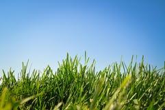 Hierba y cielo azul Imagen de archivo libre de regalías