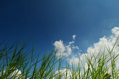 Hierba y cielo azul Fotos de archivo