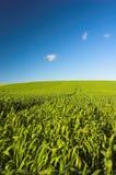 Hierba y cielo azul Imagenes de archivo