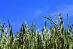 Hierba y cielo azul fotografía de archivo