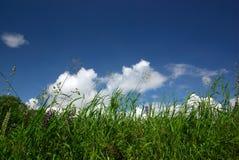 Hierba y cielo multicolores Foto de archivo
