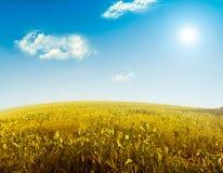Hierba y cielo perfecto Foto de archivo libre de regalías