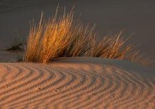 Hierba y duna Foto de archivo libre de regalías