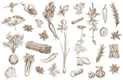 Hierba y especias fijadas Foto de archivo libre de regalías