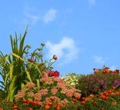 Hierba y flores Fotografía de archivo