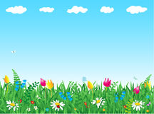 Hierba y flores Fotografía de archivo libre de regalías