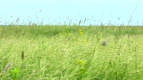 Hierba y flores de la estepa de la primavera metrajes
