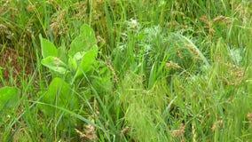 Hierba y flores de pradera en la primavera metrajes