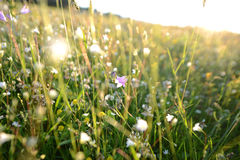 Hierba y flores de prado Imagenes de archivo