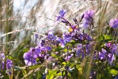 Hierba y flores de prado Fondo natural Falta de definición fácil Imagen de archivo libre de regalías