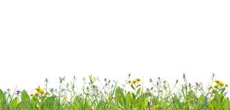 Hierba y flores salvajes imagenes de archivo